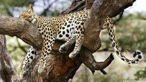 Affinity Africa Safari - Cabs Car Hire South Africa